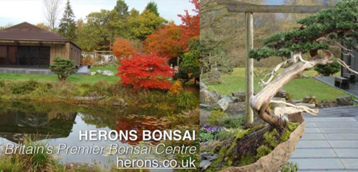 herons-bonsai-full